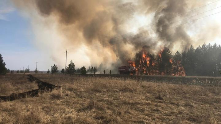 В Курганской области пожар уничтожил 1000 гектаров леса