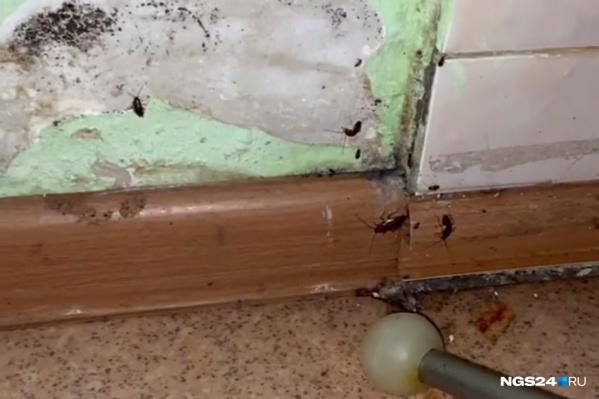Так тараканы бегали по стенам еще пару дней назад