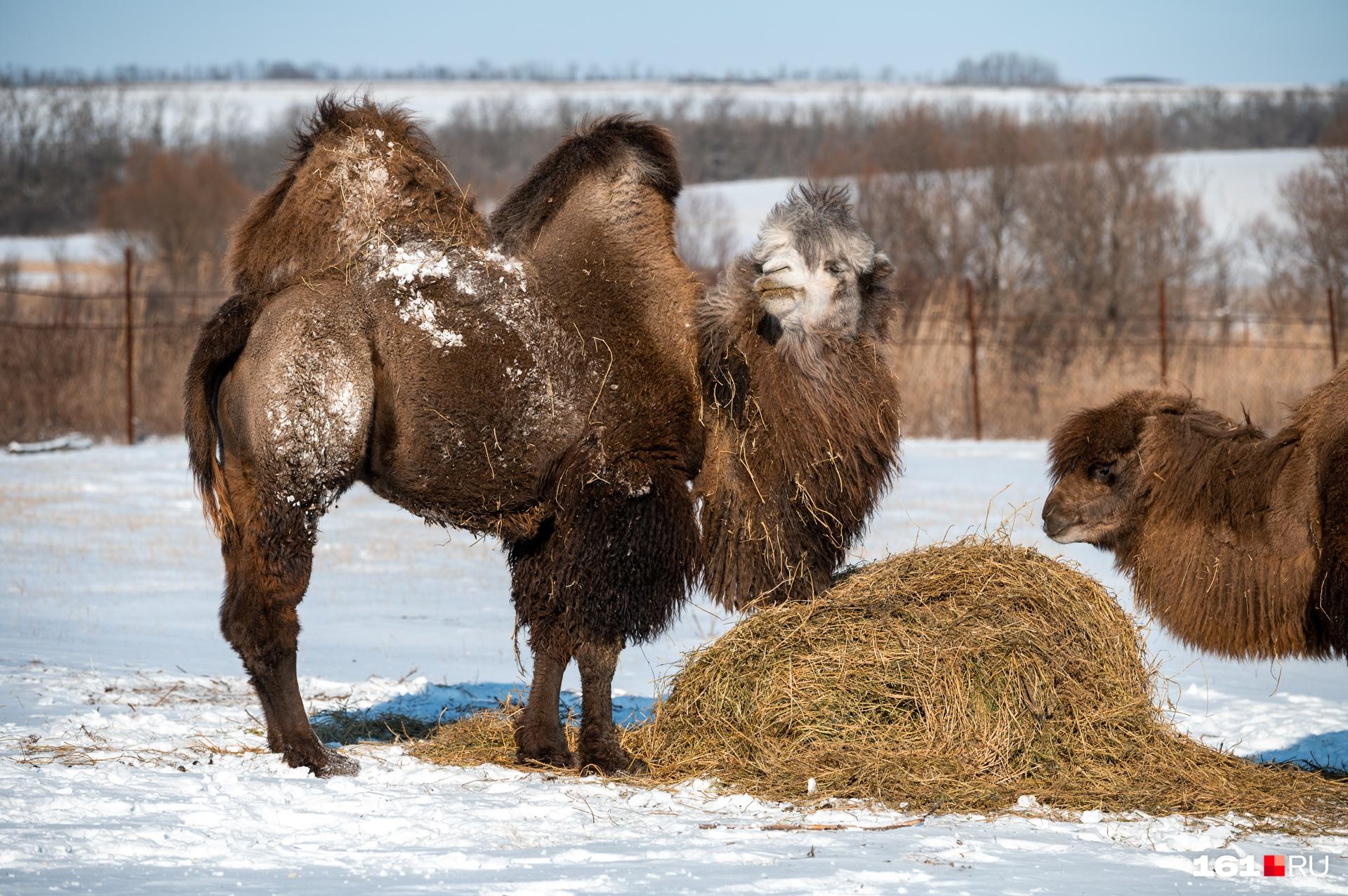 Миша и Маша повели себя более гостеприимно, чем олени, лани и муфлоны. Последние вообще решили не показываться гостям