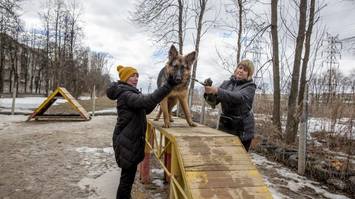 С лопатой для кучек: как на самом деле выглядят собачьи площадки в Ярославле