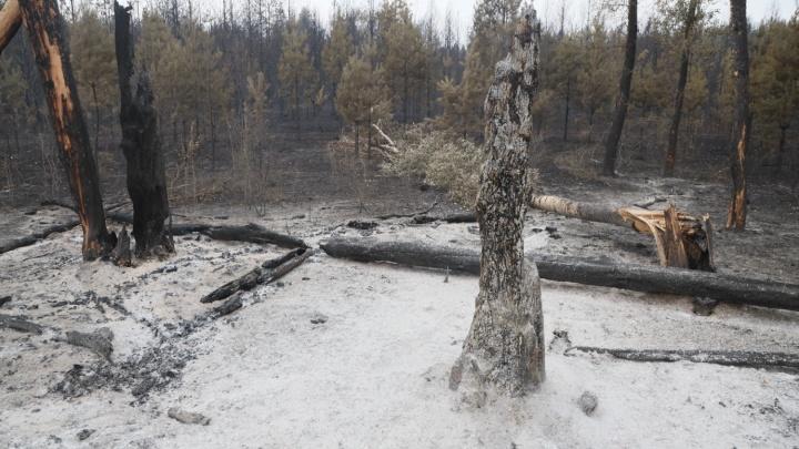 «Сосны уничтожены полностью»: директор нацпарка «Бузулукский бор» — о потерях после пожара