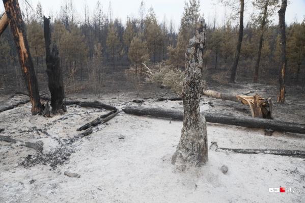 Сгоревшие деревья нужно будет восстанавливать
