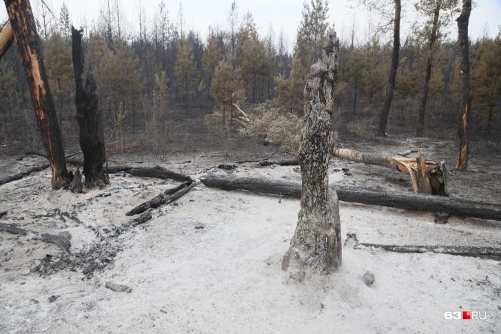 В лесу пламя тушили водой и пеной