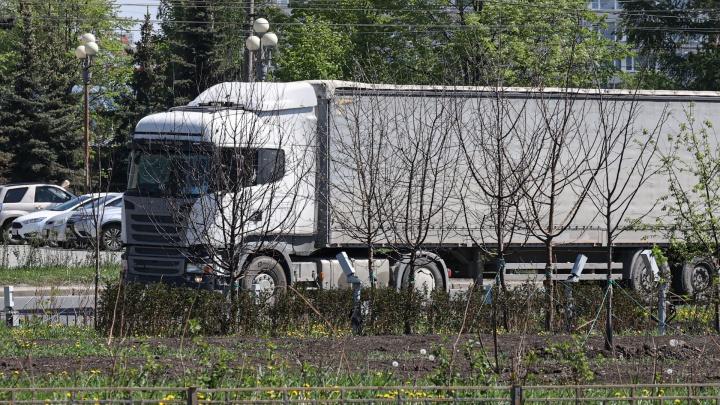 В Челябинске высадили рекордное количество деревьев в прошлом году. Смотрим, все ли прижились