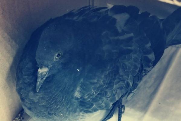 Птицу в ветклинику принес неравнодушный мужчина