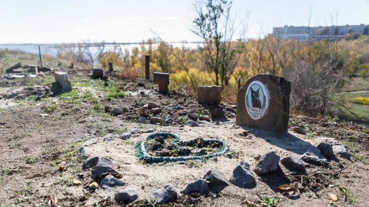 В Волгограде заработал первый крематорий для животных