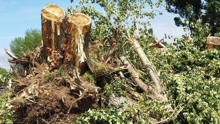 Пермяки пожаловались на вырубку деревьев в сквере у ДК Калинина. Что об этом говорят в мэрии?