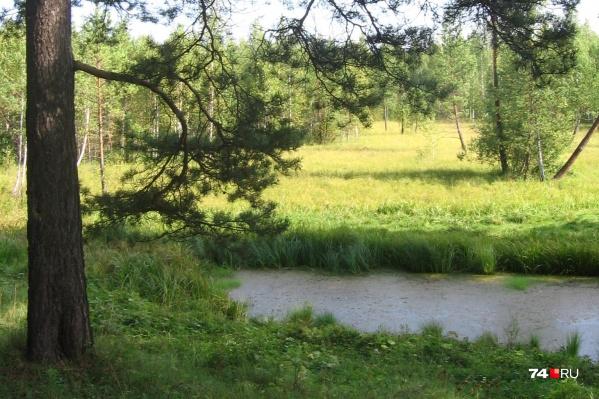 Суд обязал возместить ущерб, который компания нанесла природе в Сургутском районе