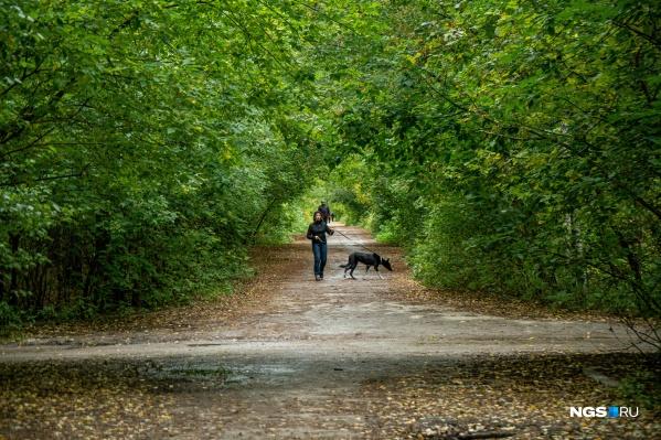 «Сосновый бор» — любимый парк жителей Калининского района. Но эта любовь обернулась для городского леса неприятными последствиями