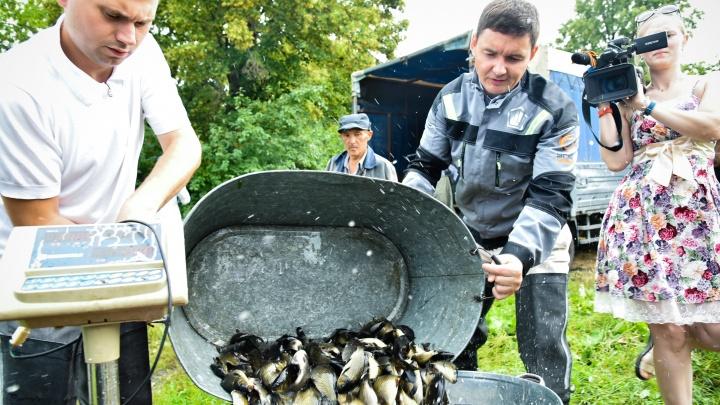 «Вода в Шершнях станет чище»: в главный питьевой источник Челябинска выпустили 69 000 особей сазана