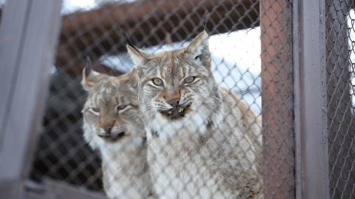 Екатеринбургский зоопарк предложили перенести в Сысерть