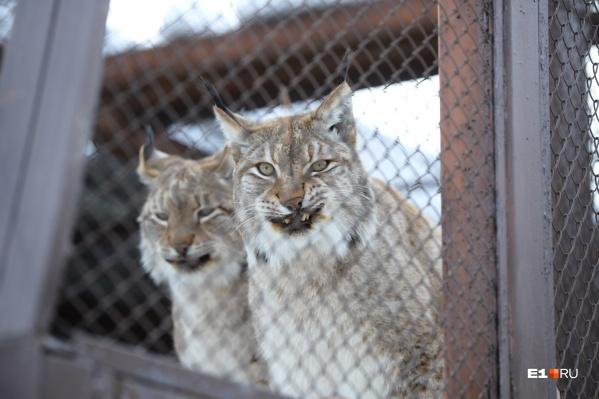 Животным из зоопарка ищут новый дом