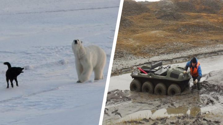 Прогулки по Арктике: моряк из Архангельска рассказал о своей работе — от Новой земли до Чукотки