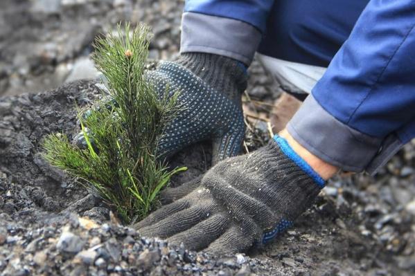 Замгубернатора написал, что кузбассовцы должны видеть, как на месте отвалов и разрезов начинают расти деревья