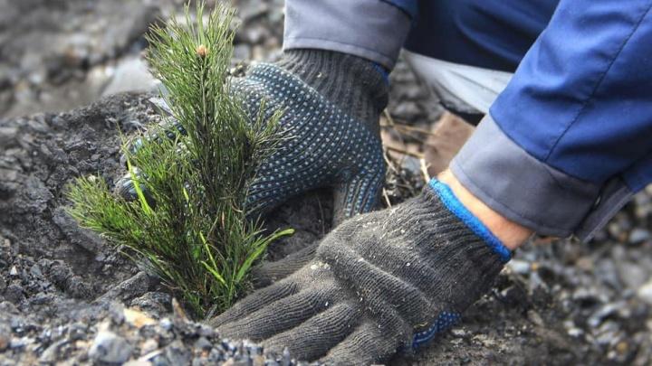 Власти Кузбасса рассказали, как собираются восстанавливать земли после угольщиков
