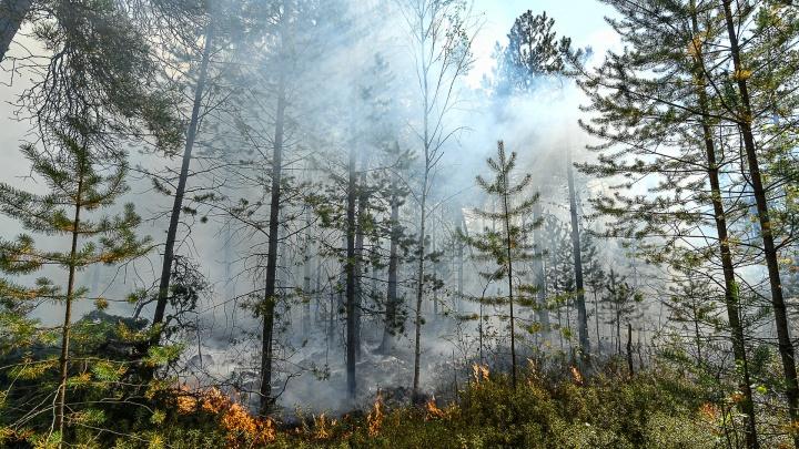 Тушить лесные пожары на Урале будут авиадесантники, которые боролись с огнем в Якутии