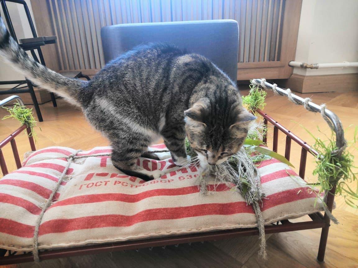 Любит готическую литературу. Мусю из Петербурга признали лучшей служебной кошкой России