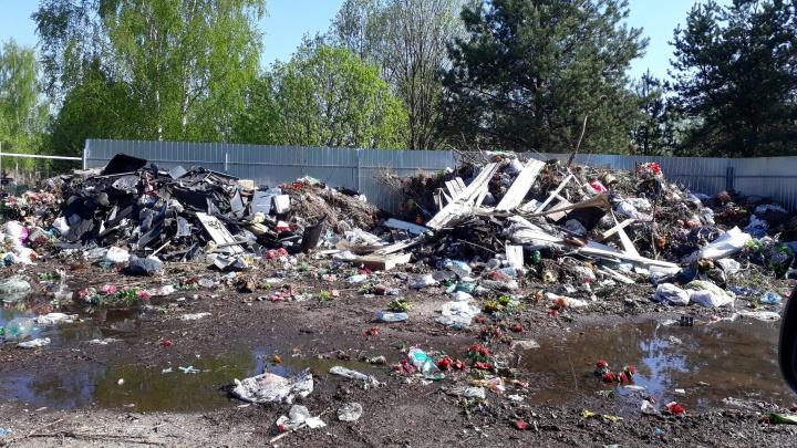 «Я там даже чьи-то ребра видела»: ярославцы показали, как кладбище превратилось в свалку