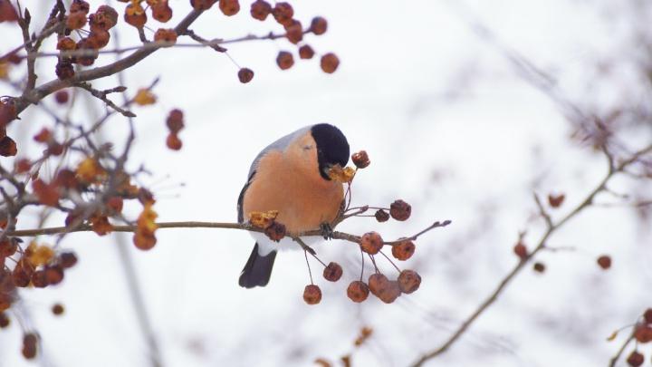 В Красноярск идет резкое потепление