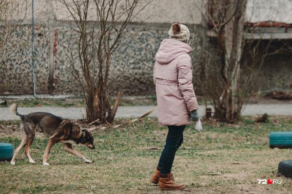 Клещи уже проснулись. Как защитить своего питомца на прогулке?