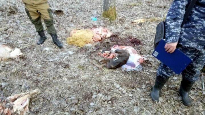 Дело об убийстве беременной лосихи под Тюменью дошло до Верховного суда России