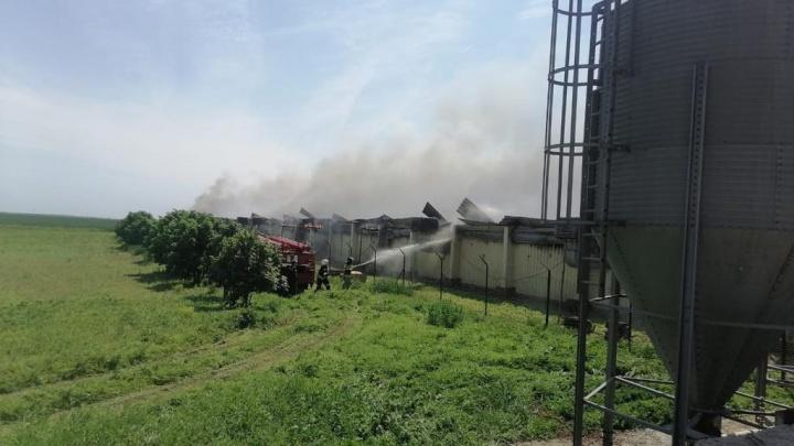 Пожар на ферме в Каменском районе погубил более 11 тысяч свиней