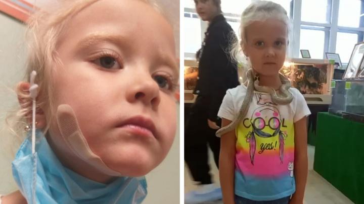 В «Парке бабочек» змея вцепилась в лицо пятилетней девочке. Теперь туда придут следователи