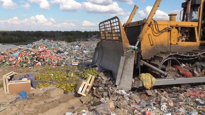 В Курганской области уничтожили тонну груш из Европы