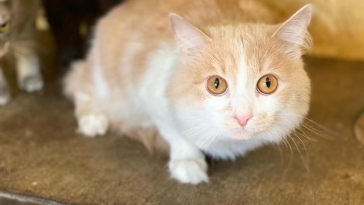 В полиции заинтересовались историей с котом, которого бросила в Кольцово хозяйка