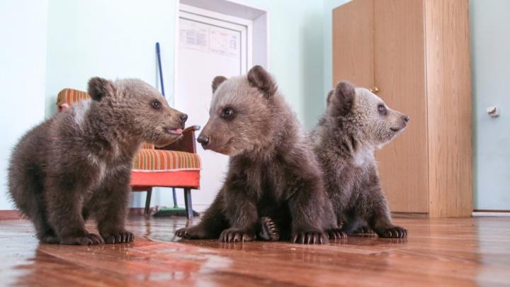В уфимском парке родились медвежата: посмотрите на видео, как они играют