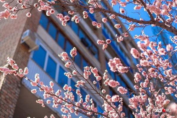 Скоро Самару украсят цветущие деревья