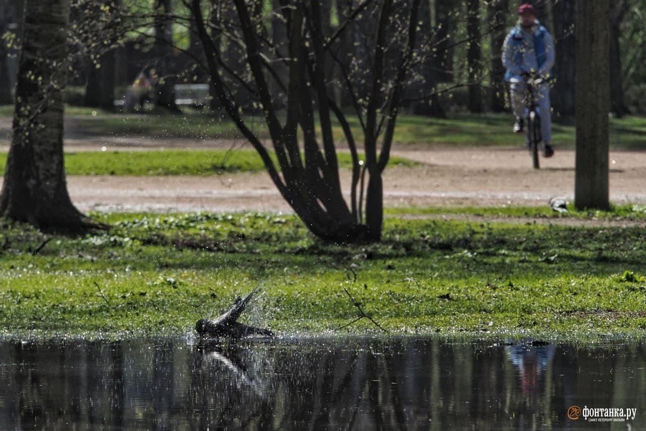 Последний день гроз в Петербурге, к выходным погода окончательно изменится