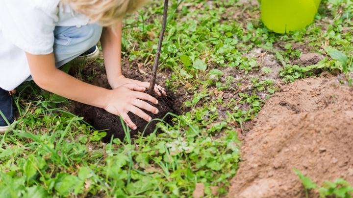 Дачники и садоводы открыли сезон: что сделать на участке и в доме весной