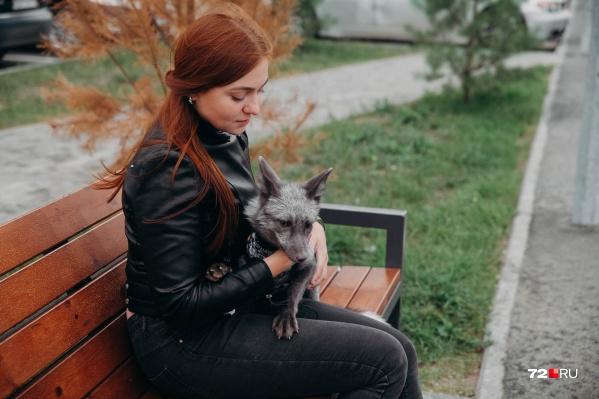 Видео с лисенком собирает тысячи лайков и сотни тысяч просмотров в Tiktok