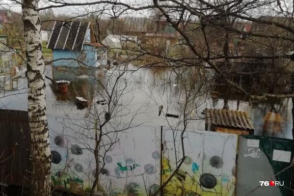 Так сейчас выглядят дачные участки в Ярославле в поселке Долматово