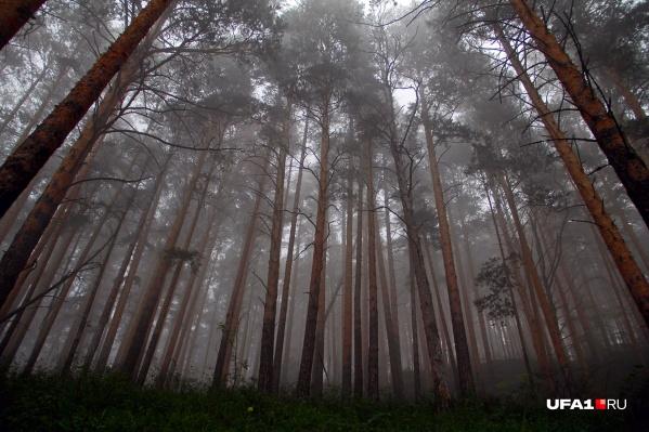 Предприниматели обсудили развитие лесопромышленности в республике