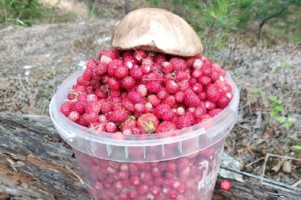 Этот урожай найден в окрестностях поселка Красного