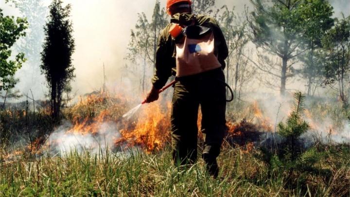 В Новороссийске горит лес на горе Лысой