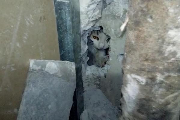 Котенок сам вышел из проделанного отверстия