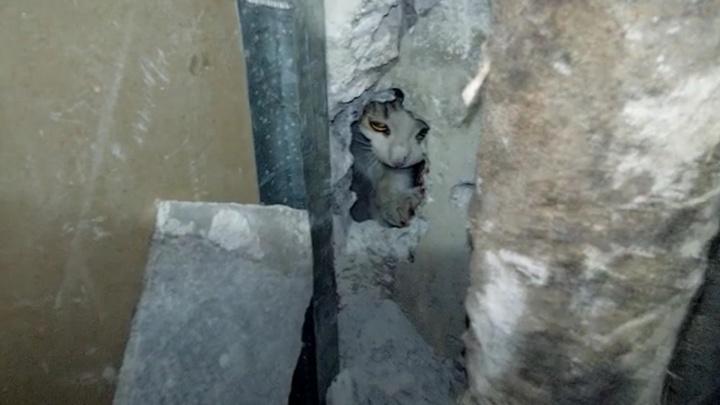 В Екатеринбурге зооспасатель вытащил из стены многоэтажки котенка, застрявшего в вентиляционном канале