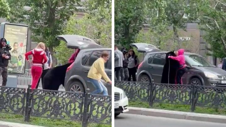 Посадили в автомобиль на Красном проспекте: очевидцы сняли ролик с медведем в центре Новосибирска