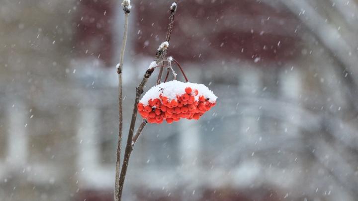 В нескольких районах Башкирии выпал первый снег. Скоро он будет и в Уфе
