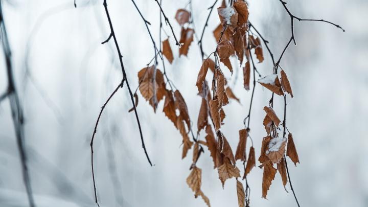 Неужели уже весна? На выходных в Кузбассе будет плюсовая температура