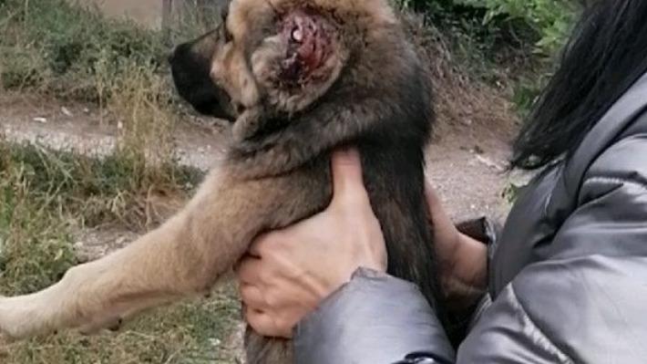 Отрезал щенкам уши и хвосты: живодер из Чапаевска попал под статью