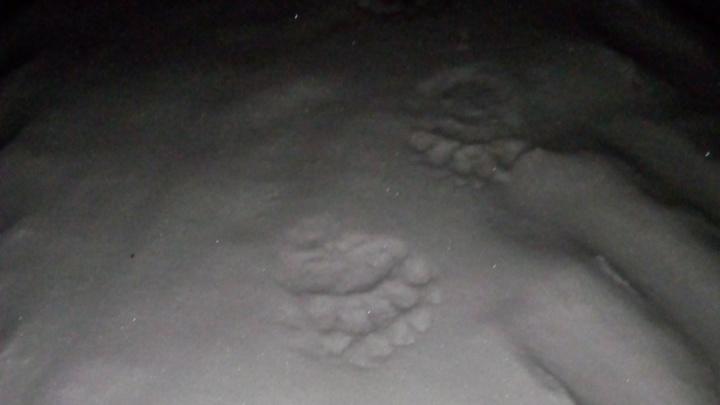 В Пермском крае возле поселка бродит медведь-шатун: занятия в школах и кружках отменили