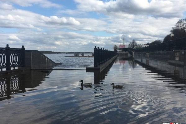 За 2 мая уровень воды в реках Ярославской области еще поднялся