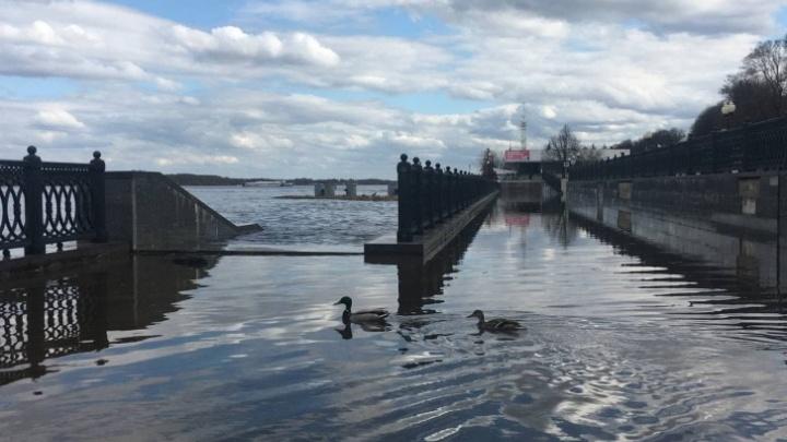 В Ярославской области уровень рек поднимется еще больше: прогноз