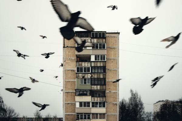 Одно из самых популярных фото Георгия — стая птиц и старый девятиэтажный дом