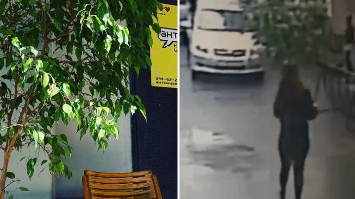 Девушка, которая украла 40-килограммовый горшок с деревом в центре Екатеринбурга, пообещала его вернуть