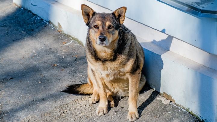 В Перми запретили подкармливать бездомных животных